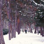 Велики парк, зима