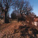 Пејсаж из Бечевице, недалеко од Топонице. Једно од најстаријих шумадијских села, запостављено у време комунизма у сваком погледу.