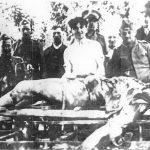 Петар Теслић индустријалац из Сиска, кога је 1941. убио и масакрирао његов радник Хрват. Фотографију су начинили злочинци непосредно по убиству.