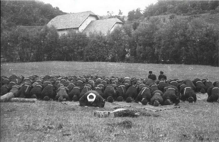 """Муслимани из """"Црне Легије"""" у Сребреници пролећа 1942. године"""